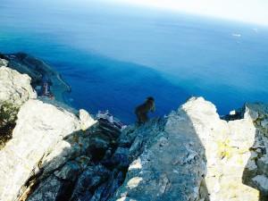 Apa på Gibraltar