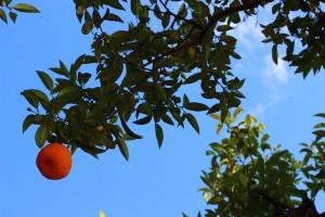 Spansk apelsin